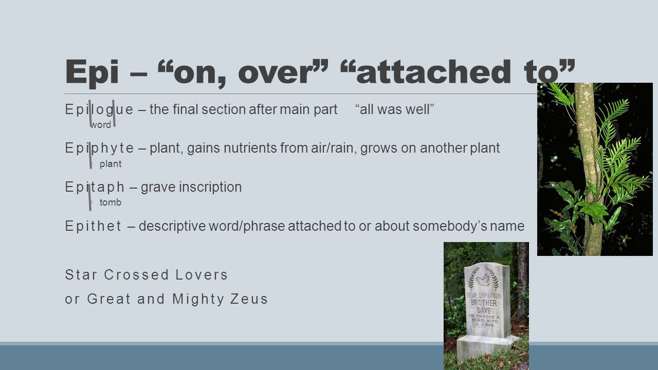 Epi – on, over attached to Epilogue – the final section after main part all was well word Epiphyte – plant, gains nutrients from air/rain, grows on another plant ◦ plant Epitaph – grave inscription ◦ tomb Epithet – descriptive word/phrase attached to or about somebody's name Star Crossed Lovers or Great and Mighty Zeus