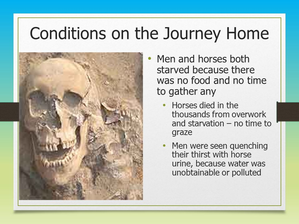 Conditions on the Journey Home Men and horses both starved because there was no food and no time to gather any Horses died in the thousands from overwork and starvation – no time to graze Men were seen quenching their thirst with horse urine, because water was unobtainable or polluted