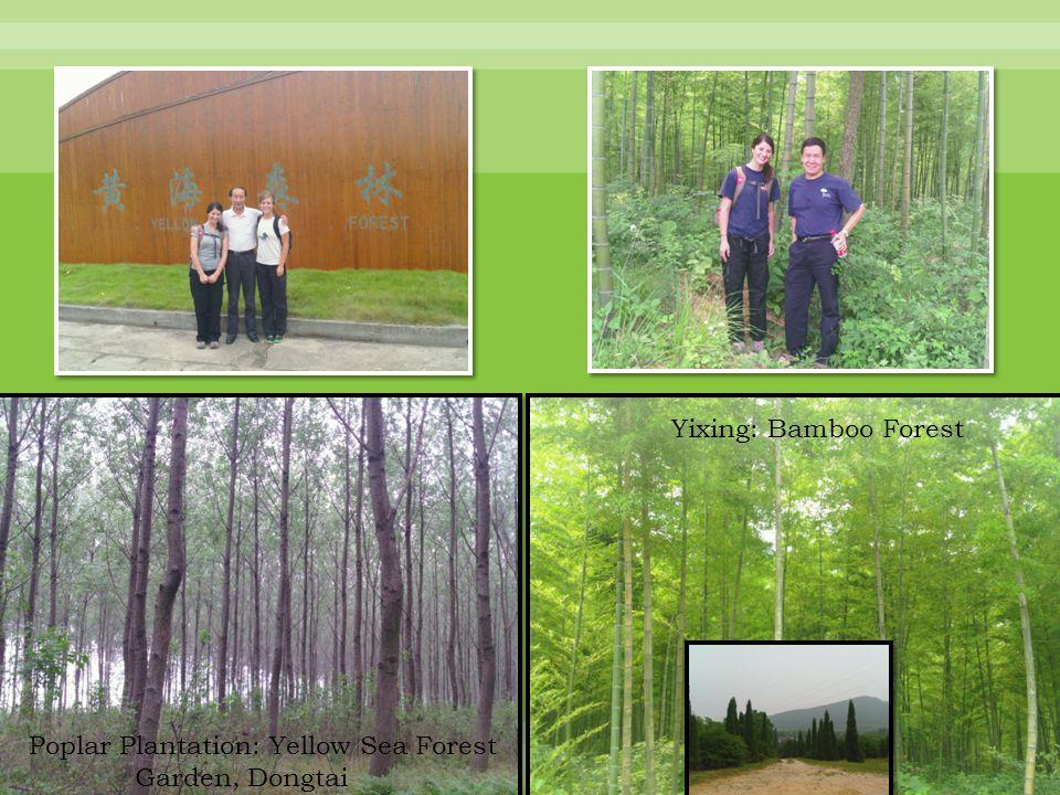 Nanjing Forestry University Campus Nanjing City