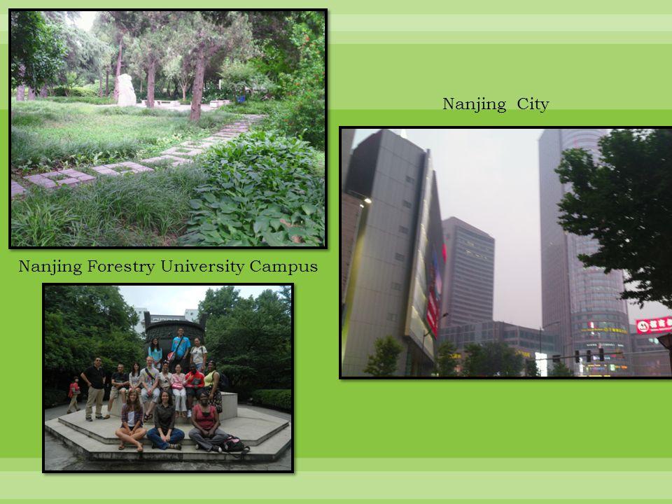 Nanjing City Sites (38) 南京网站 Nanjing Forestry University Sites (12) 南京林业大学