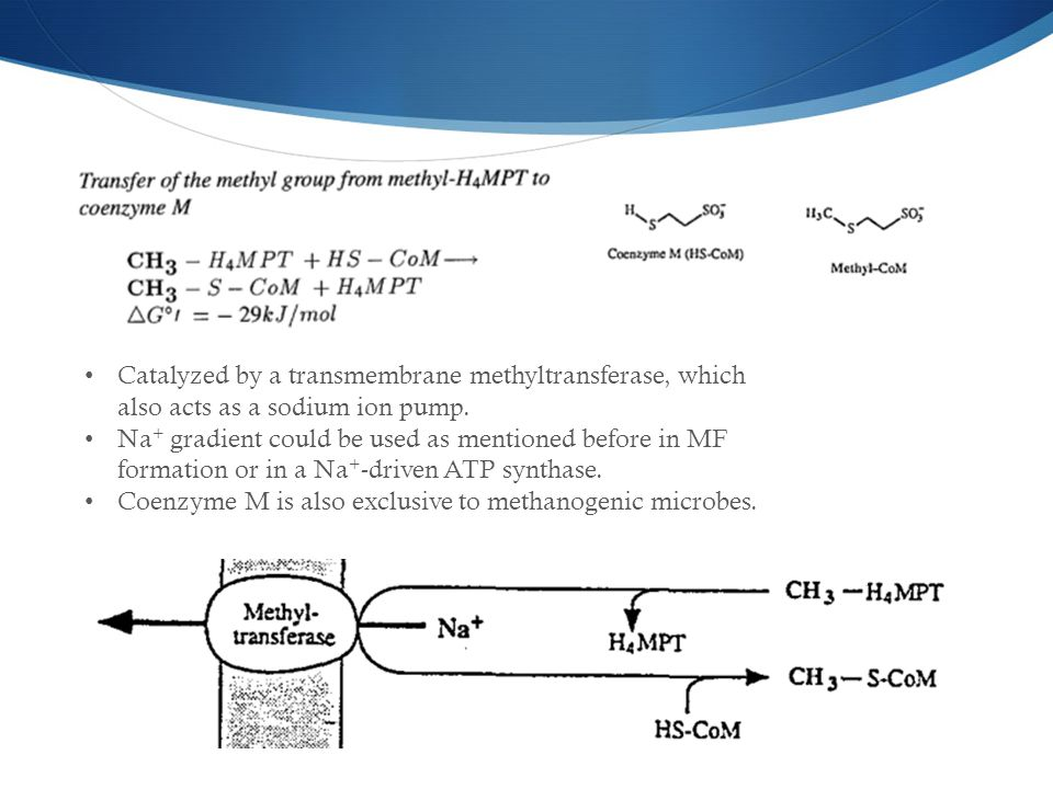 Catalyzed by a transmembrane methyltransferase, which also acts as a sodium ion pump.