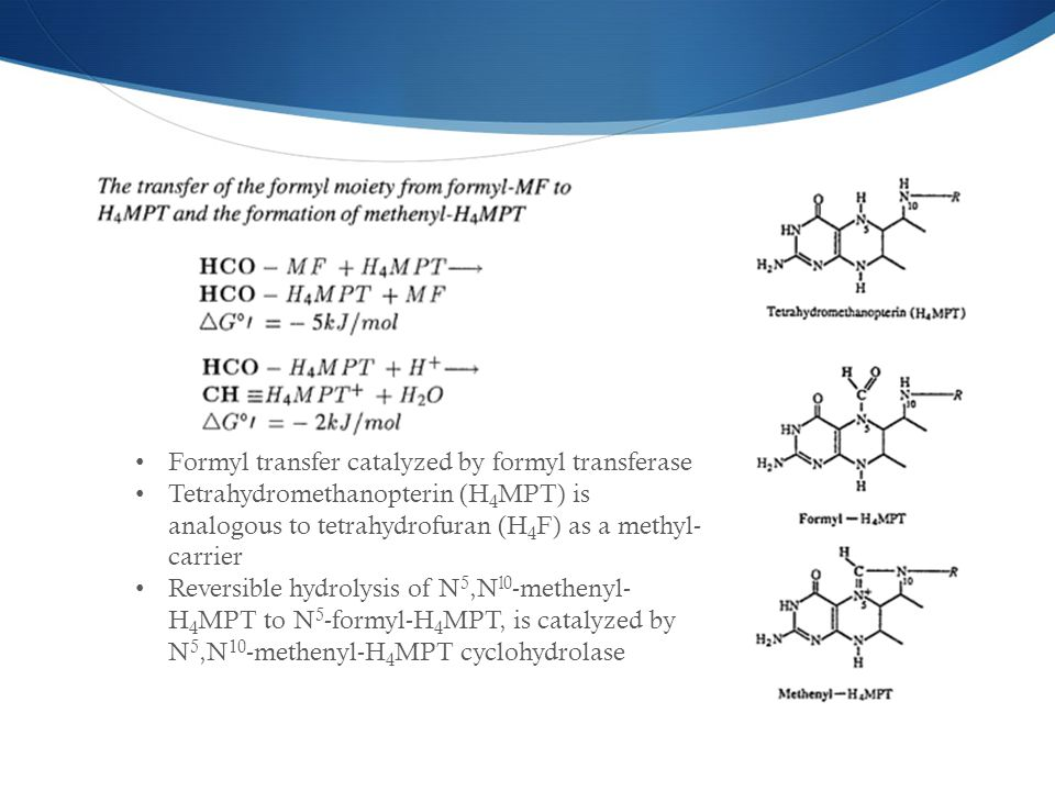 Formyl transfer catalyzed by formyl transferase Tetrahydromethanopterin (H 4 MPT) is analogous to tetrahydrofuran (H 4 F) as a methyl- carrier Reversible hydrolysis of N 5,N l0 -methenyl- H 4 MPT to N 5 -formyl-H 4 MPT, is catalyzed by N 5,N 10 -methenyl-H 4 MPT cyclohydrolase