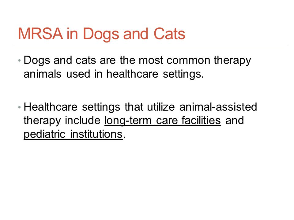 MRSA in Dogs and Cats Dogs and cats are the most common therapy animals used in healthcare settings.