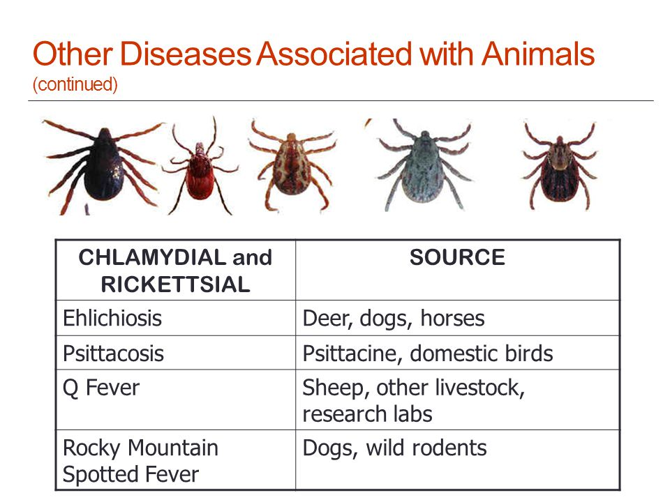 Other Diseases Associated with Animals (continued) CHLAMYDIAL and RICKETTSIAL SOURCE EhlichiosisDeer, dogs, horses PsittacosisPsittacine, domestic birds Q FeverSheep, other livestock, research labs Rocky Mountain Spotted Fever Dogs, wild rodents