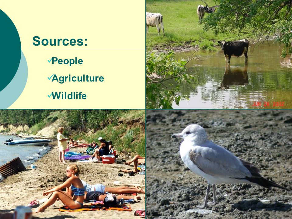 Sources: People Agriculture Wildlife