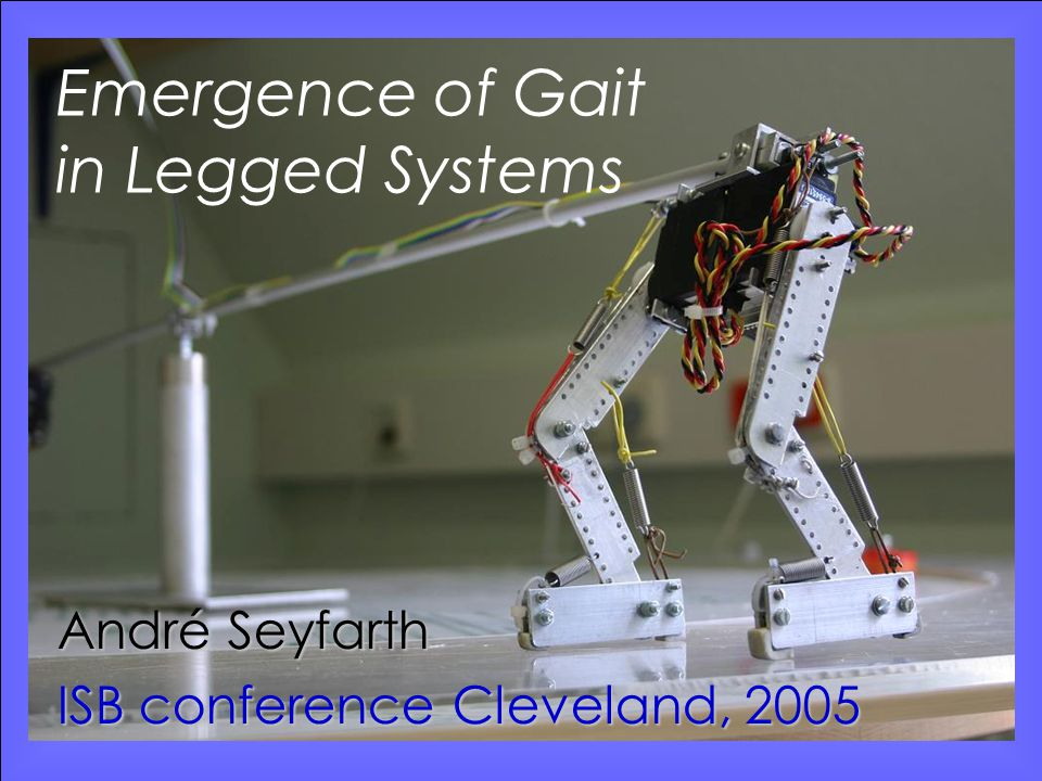 ISB conference 2005 Seyfarth: Emergence of gaitwww.lauflabor.de Take home message (long jump) The dynamics of long jump can well be described by a simple two-mass model Energetic losses due to impacts and eccentric muscle operation can improve jumping distance Tendon compliance shifts eccentric muscle operation into midstance