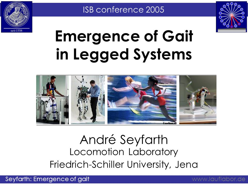 ISB conference 2005 Seyfarth: Emergence of gaitwww.lauflabor.de Take home message (positive force feedback) In hopping or running tasks, the generation of extensor muscle activity could be facilitated by positive force feedback This control regime imitates spring-like leg behavior and is robust with respect to environmental changes