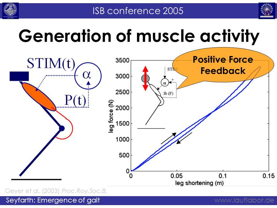 ISB conference 2005 Seyfarth: Emergence of gaitwww.lauflabor.de Geyer et al. (2003) Proc.Roy.Soc.B. Generation of muscle activity Positive Force Feedb