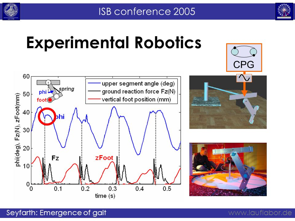 ISB conference 2005 Seyfarth: Emergence of gaitwww.lauflabor.de Experimental Robotics CPG