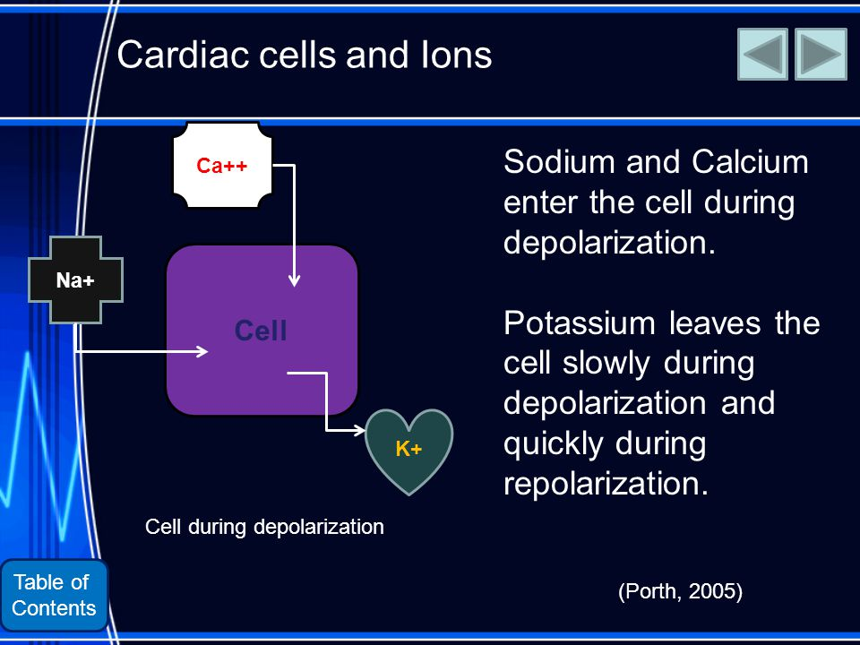 Table of Contents Cardiac cells and Ions Sodium and Calcium enter the cell during depolarization.