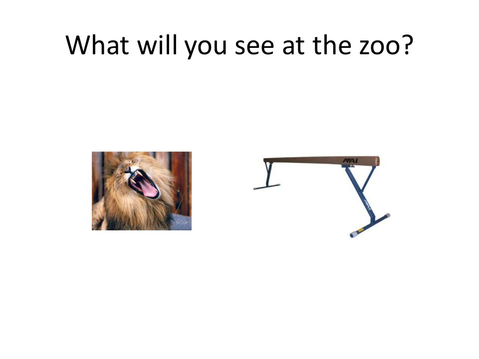 What will you see at the zoo?
