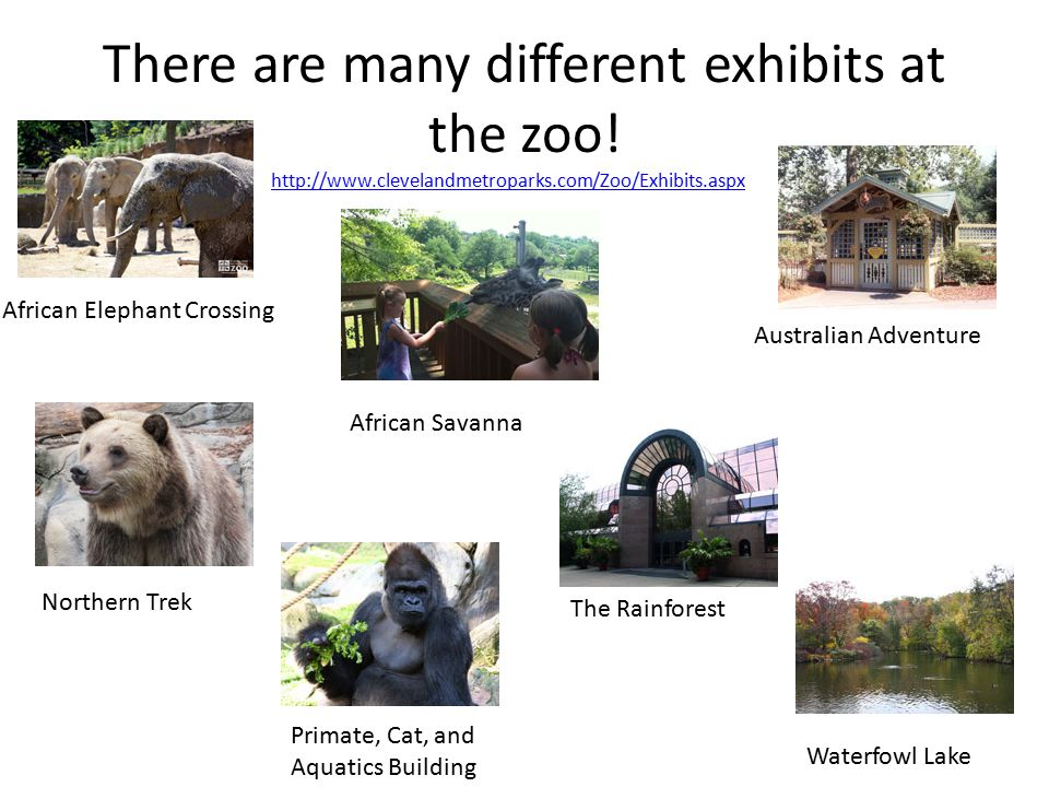 There are many different exhibits at the zoo.