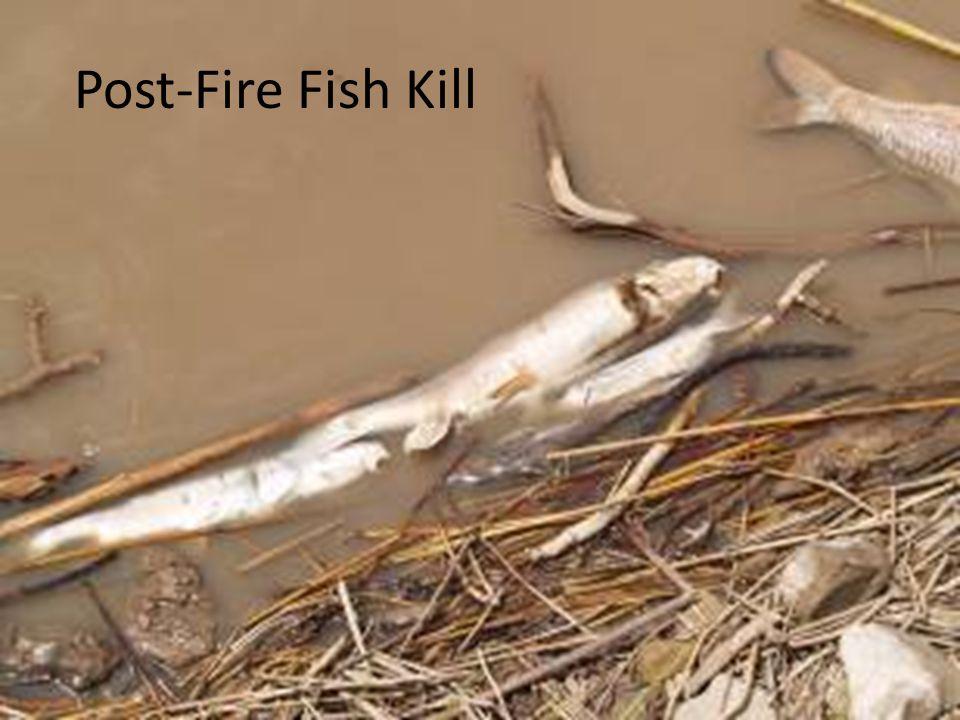 Post-Fire Fish Kill