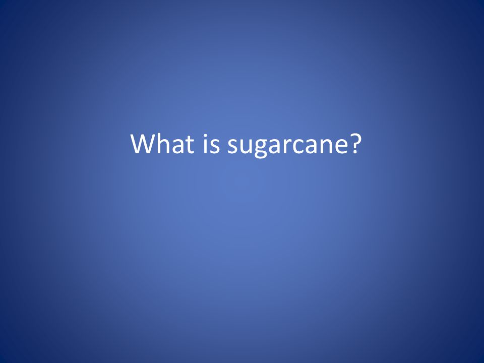 What is sugarcane?