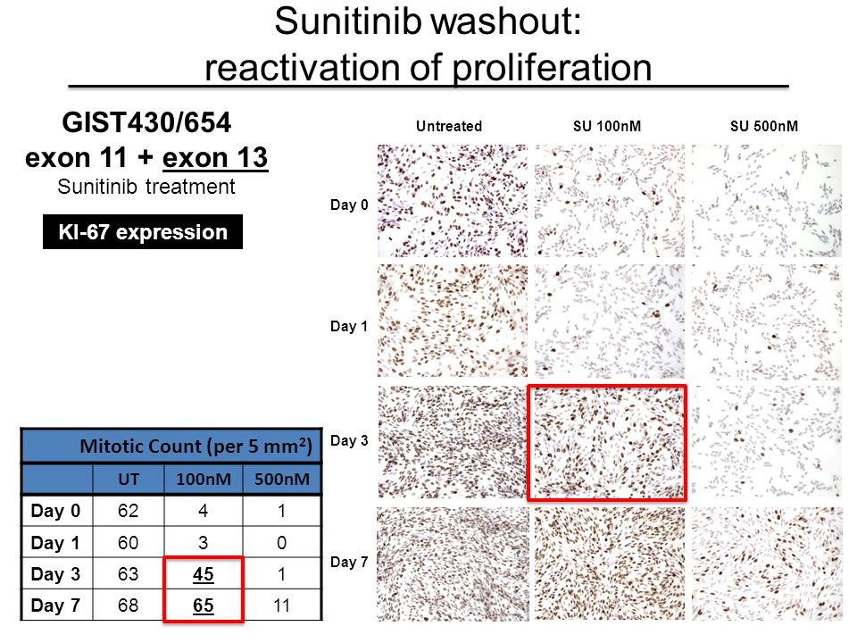 UntreatedSU 100nMSU 500nM Day 0 Day 1 Day 3 Day 7 KI-67 expression Sunitinib washout: reactivation of proliferation Mitotic Count (per 5 mm 2 ) UT100n