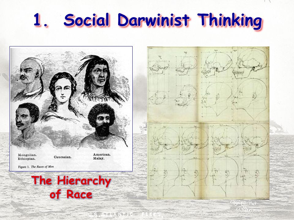 1. Social Darwinist Thinking The Hierarchy of Race