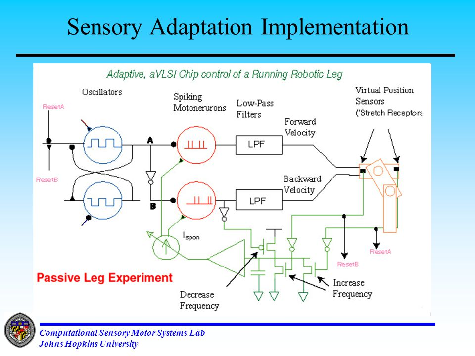 Computational Sensory Motor Systems Lab Johns Hopkins University Adaptive and Autonomous Control of Running Legs Set the frequency of strides Set the center of the limb swing Set the angular width of a stride