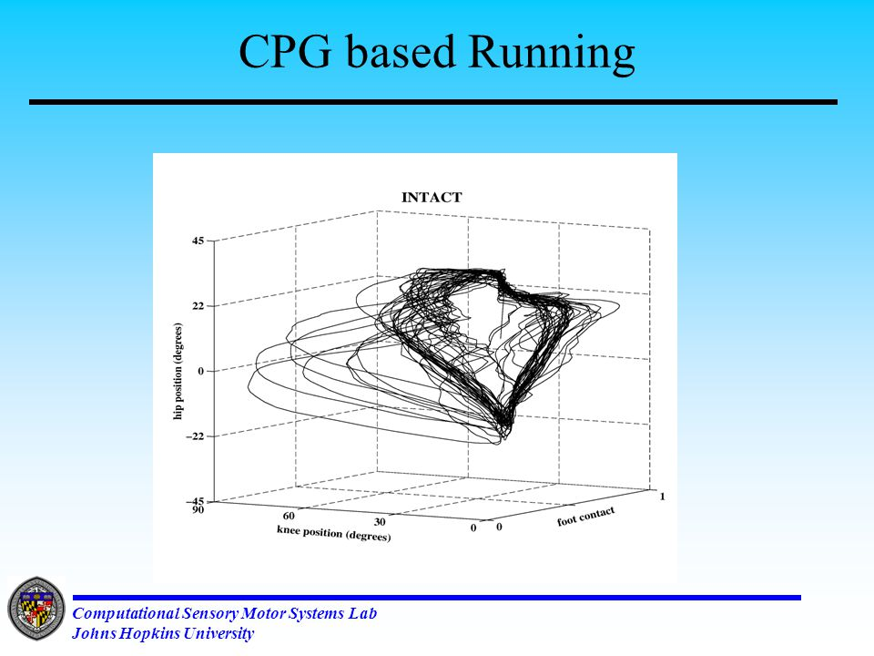 Computational Sensory Motor Systems Lab Johns Hopkins University CPG Controller with Sensory Feedback Passive Knee joint Driven Treadmill Mechanical Harness