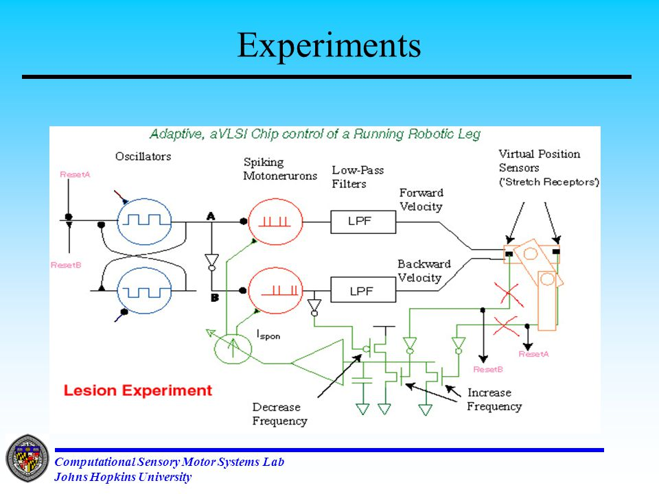 Computational Sensory Motor Systems Lab Johns Hopkins University CPG based Running