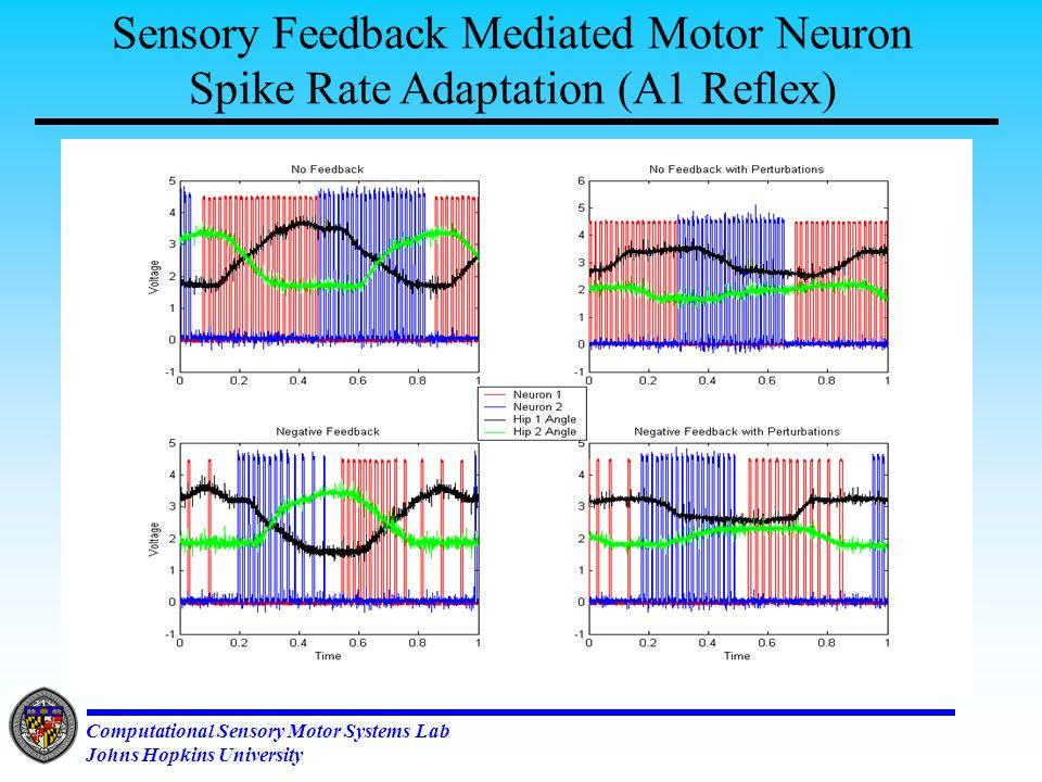 Computational Sensory Motor Systems Lab Johns Hopkins University Two Mono-peds to make One Bi-ped Uncoupled: Right - Bad gait Left - Good gait Coupled: Inhibition Asymmetric Weights
