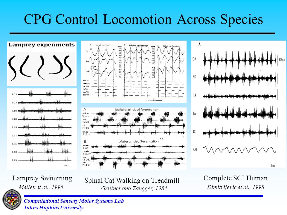 Computational Sensory Motor Systems Lab Johns Hopkins University Applications: Physical Augmentation Neural prosthesis for spinal cord patients Cleveland FES Center, Case-Western Reserve U.