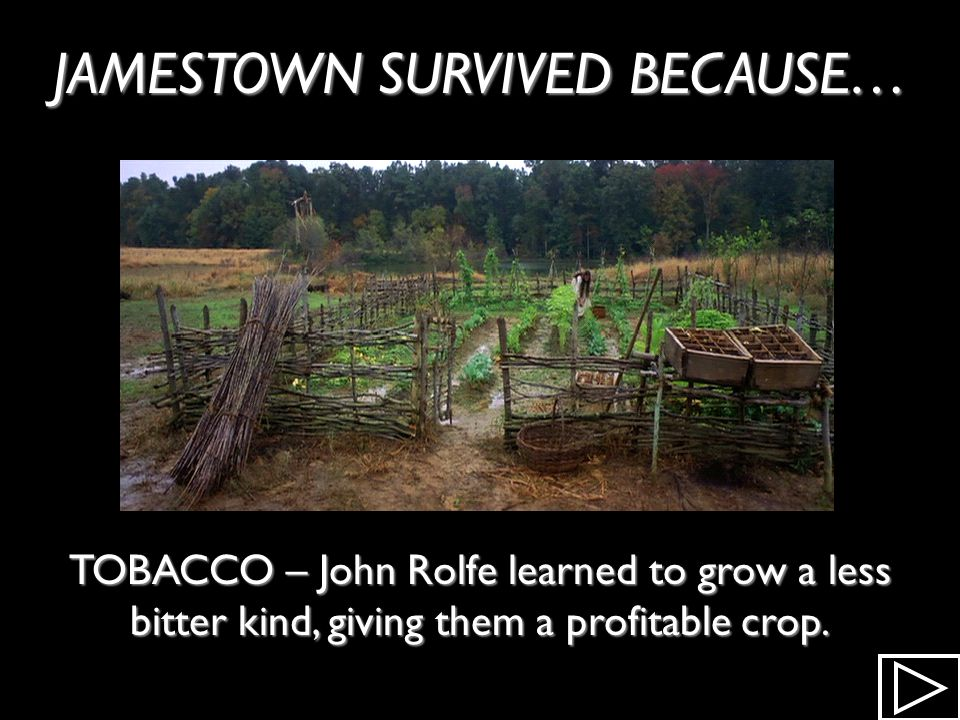 JAMESTOWN SURVIVED BECAUSE… NATIVE AMERICANS – The Powhatan Tribe help them gain the food they needed to survive.