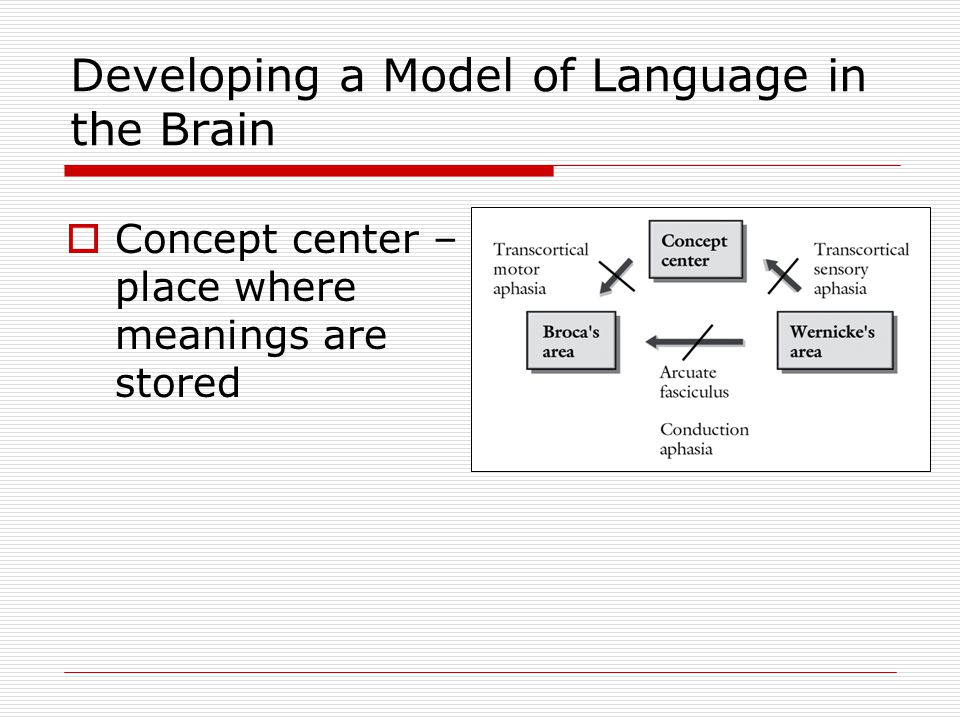 Transcortical Motor Aphasia  Transcortical motor: Comprehension and repetition are preserved, however the speech is nonfluent
