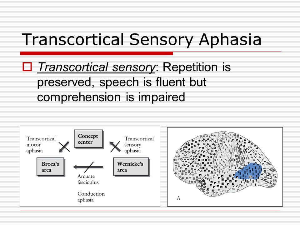 Fluent Aphasia Anomic Aphasia  Amnesic aphasia  Comprehend speech  Fluent speech  Repetition OK  Cannot name objects  Naming problems tend to be a result of temporal damage, whereas verb finding problems tend to be a result of left frontal damage.