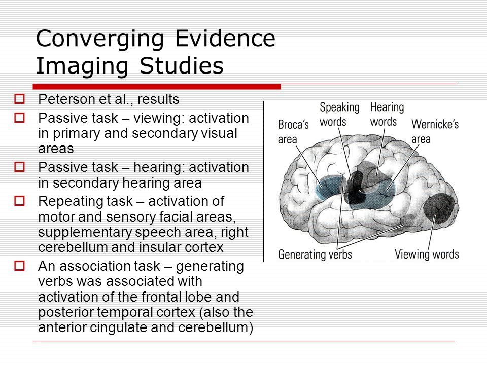 Converging Evidence Imaging Studies  Binder et al., presented subjects with either tones (500- or 750-Hz) or meaningful words (nouns designating animals)  Also had a rest condition  Subtracted method revealed that large portions of the brain are involved in language processing