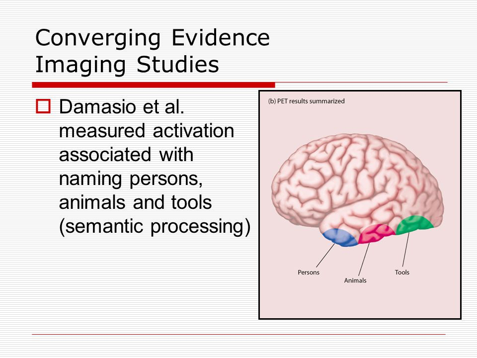 Converging Evidence Imaging Studies - Summary  Imaging data does support evidence that classical language areas (e.g., Broca's and Wernicke's areas) are important for language  However, many other parts of the brain are also important for language functions  It is more likely that the brain is organized in units devoted to phonology, syntax and semantics rather than speaking, repeating and listening (e.g., classical model)