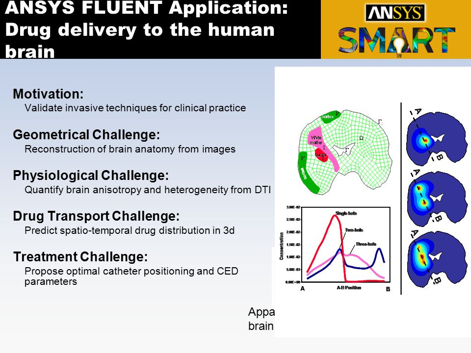 ANSYS FLUENT Application: Drug delivery to the human brain Motivation: Validate invasive techniques for clinical practice Geometrical Challenge: Recon