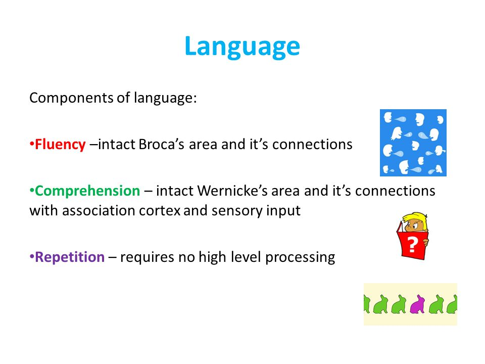 Language Components of language: Fluency –intact Broca's area and it's connections Comprehension – intact Wernicke's area and it's connections with association cortex and sensory input Repetition – requires no high level processing