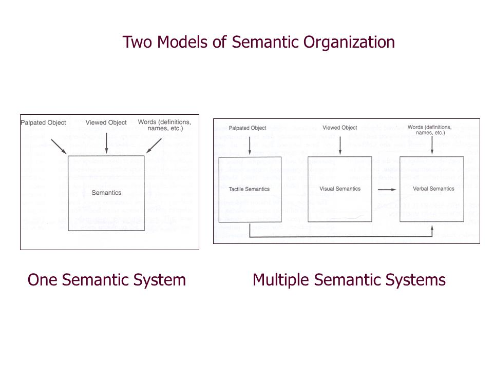 Two Models of Semantic Organization One Semantic SystemMultiple Semantic Systems