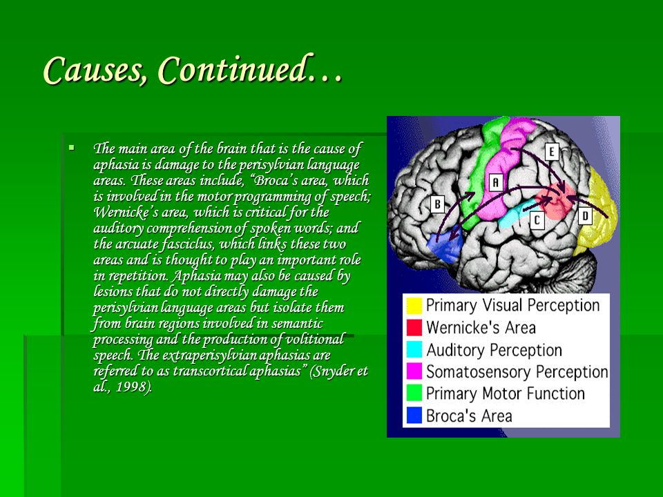 Causes, Continued…  The main area of the brain that is the cause of aphasia is damage to the perisylvian language areas.