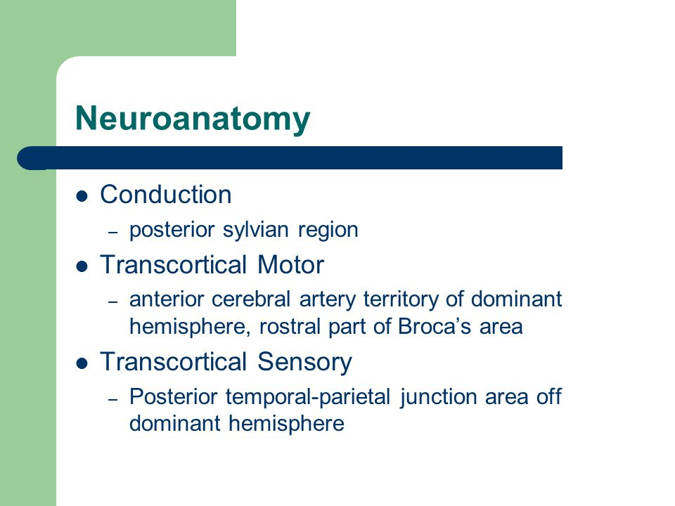 Neuroanatomy Conduction – posterior sylvian region Transcortical Motor – anterior cerebral artery territory of dominant hemisphere, rostral part of Broca's area Transcortical Sensory – Posterior temporal-parietal junction area off dominant hemisphere