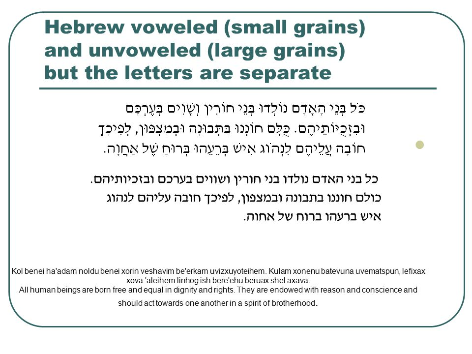 Hebrew voweled (small grains) and unvoweled (large grains) but the letters are separate Kol benei ha adam noldu benei xorin veshavim be erkam uvizxuyoteihem.