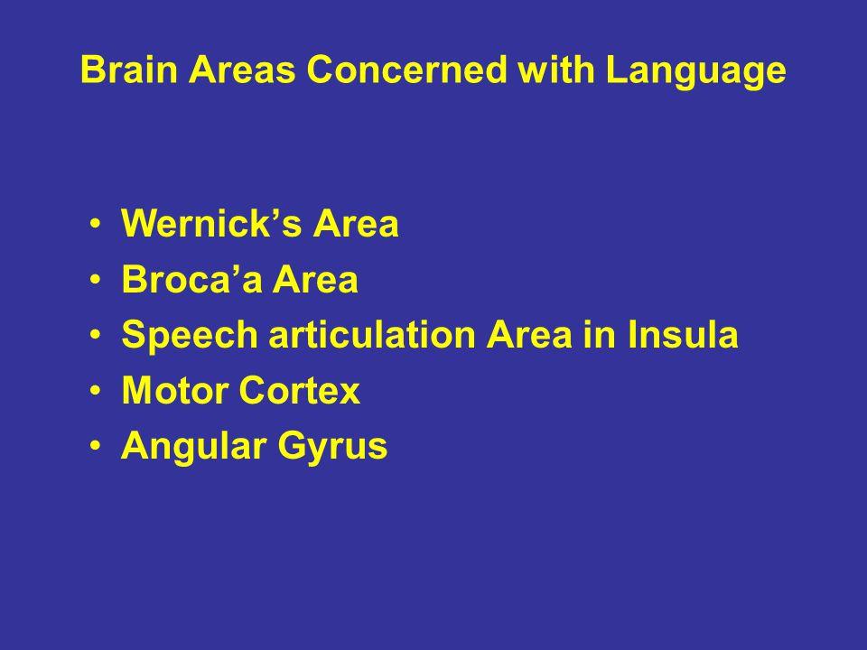 Brain Areas Concerned with Language Wernick's Area Broca'a Area Speech articulation Area in Insula Motor Cortex Angular Gyrus