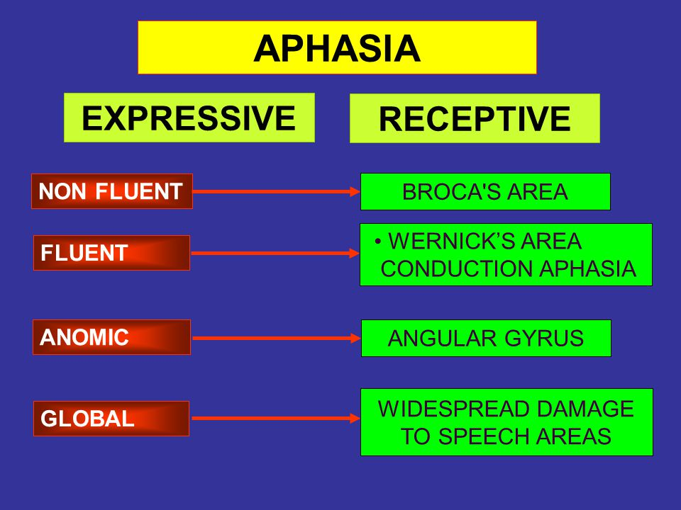 ANOMIC NON FLUENT GLOBAL APHASIA FLUENT BROCA'S AREA WERNICK'S AREA CONDUCTION APHASIA ANGULAR GYRUS WIDESPREAD DAMAGE TO SPEECH AREAS EXPRESSIVE RECE
