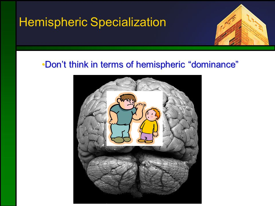 Don't think in terms of hemispheric dominance Don't think in terms of hemispheric dominance