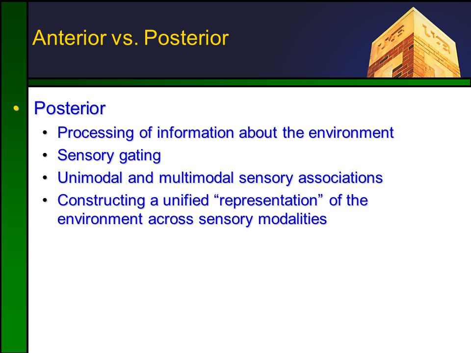 PosteriorPosterior Processing of information about the environmentProcessing of information about the environment Sensory gatingSensory gating Unimodal and multimodal sensory associationsUnimodal and multimodal sensory associations Constructing a unified representation of the environment across sensory modalitiesConstructing a unified representation of the environment across sensory modalities