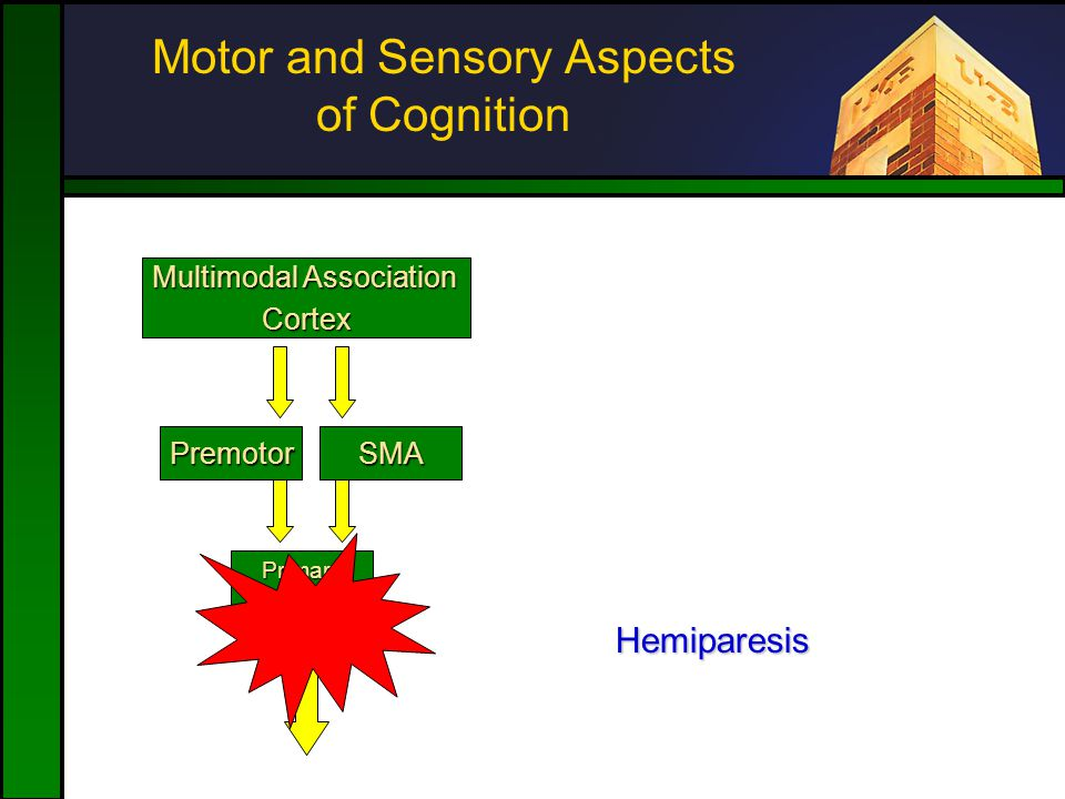 Motor and Sensory Aspects of Cognition SMAPremotor PrimaryMotor Multimodal Association Cortex Hemiparesis