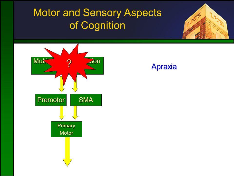 Motor and Sensory Aspects of Cognition SMAPremotor PrimaryMotor Multimodal Association Cortex .