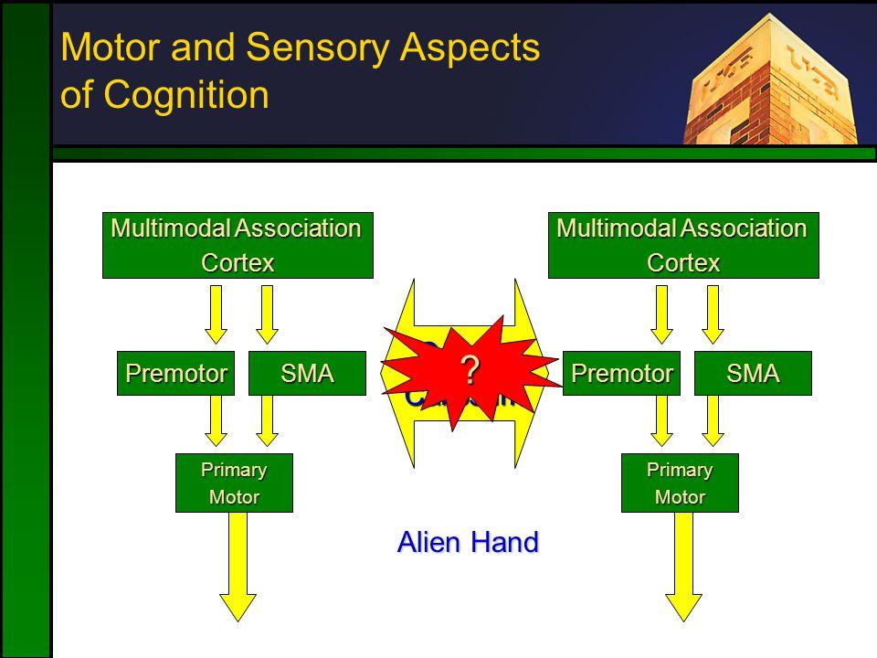 Motor and Sensory Aspects of Cognition SMAPremotor PrimaryMotor Multimodal Association Cortex SMAPremotor PrimaryMotor Cortex CorpusCallosum .