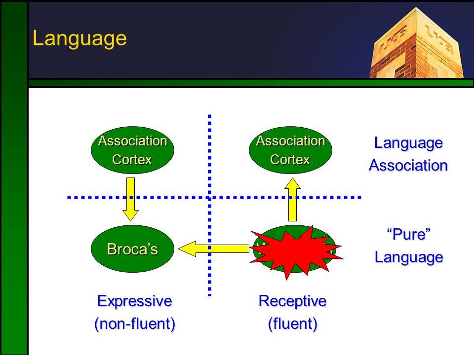 Broca'sWernicke's AssociationCortexAssociationCortex Expressive(non-fluent)Receptive(fluent) LanguageAssociation Pure Language