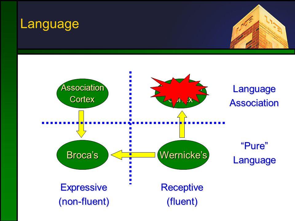 Language Broca'sWernicke's AssociationCortexAssociationCortex Expressive(non-fluent)Receptive(fluent) LanguageAssociation Pure Language