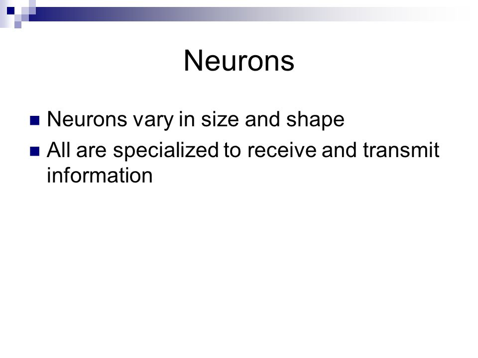 Neurons Neurons vary in size and shape All are specialized to receive and transmit information