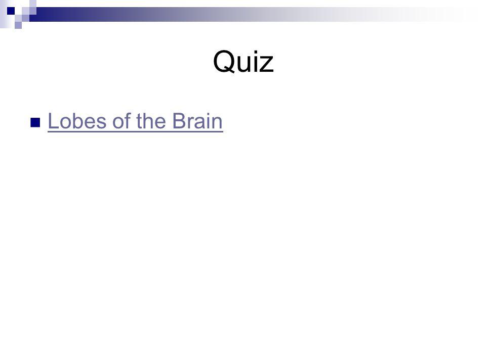 Quiz Lobes of the Brain