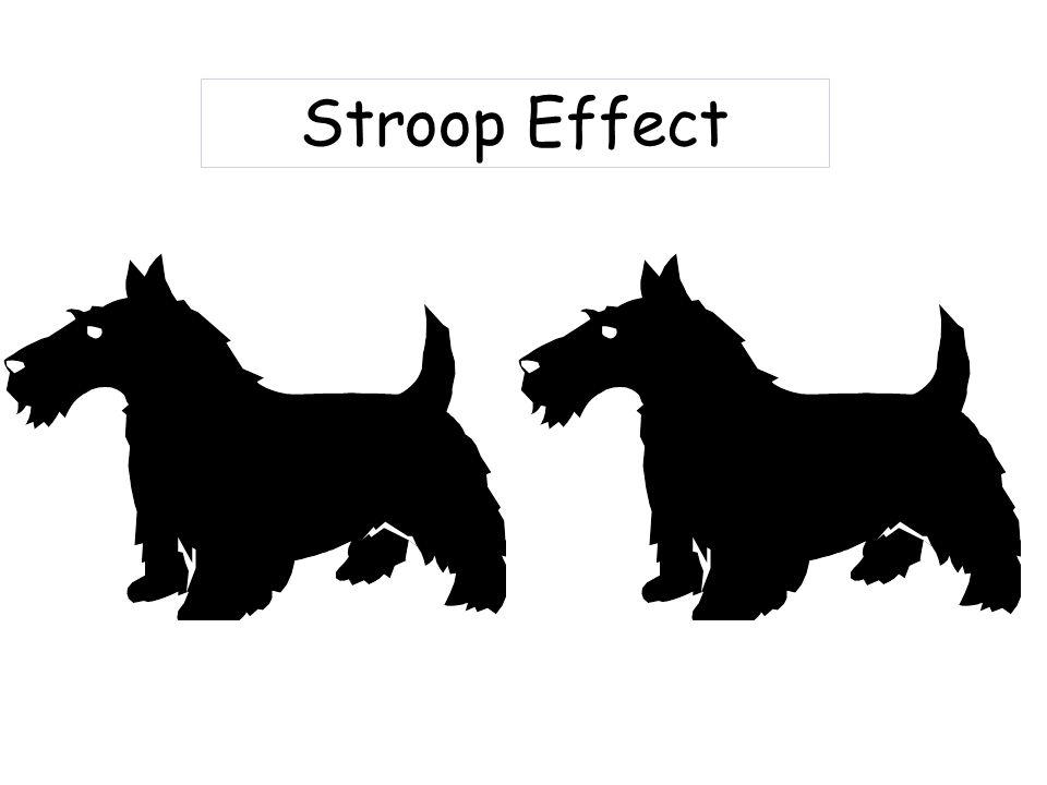 Stroop Effect horse