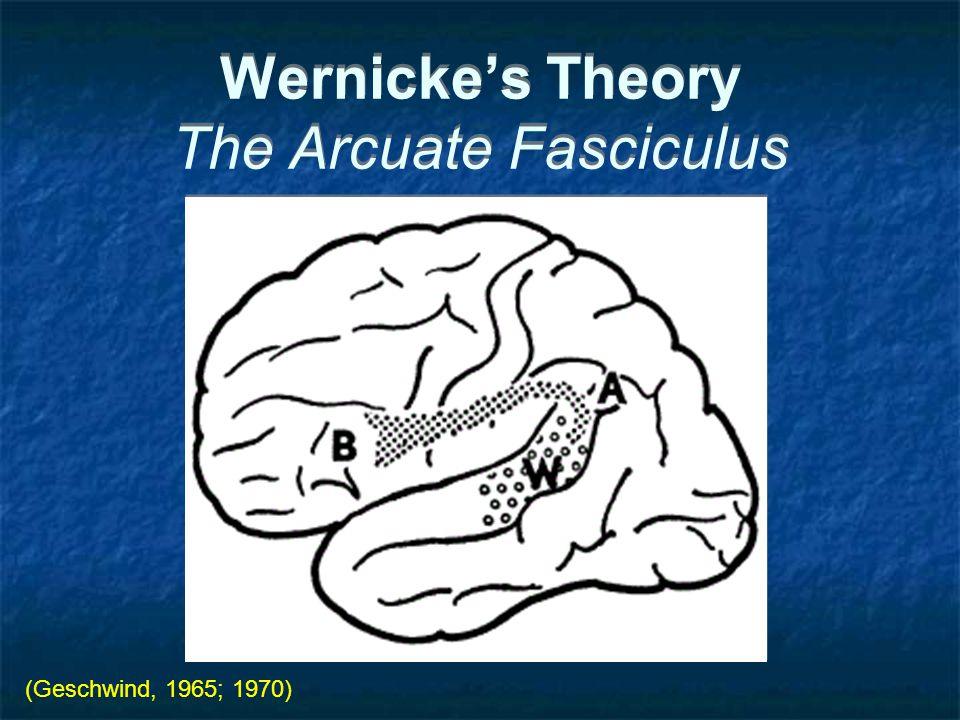Wernicke's Theory The Arcuate Fasciculus (Geschwind, 1965; 1970)