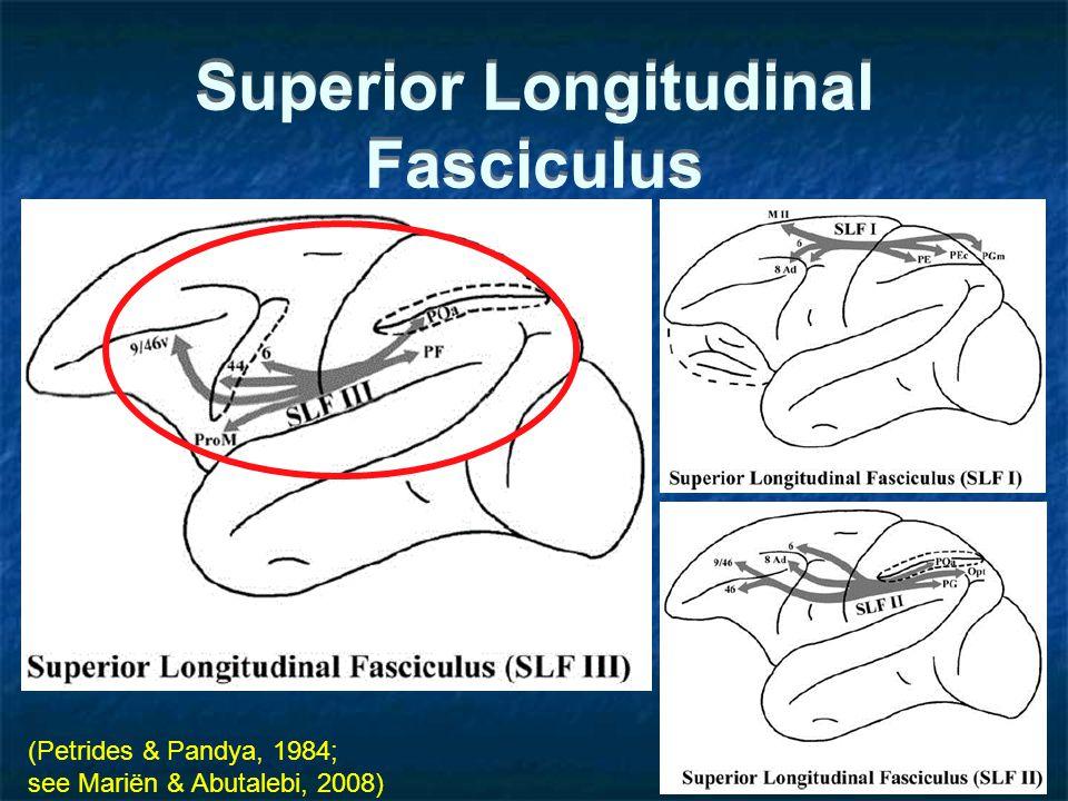Superior Longitudinal Fasciculus (Petrides & Pandya, 1984; see Mariën & Abutalebi, 2008)